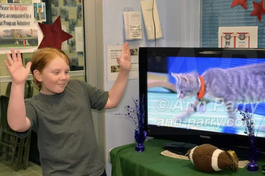Kitten Bowl III Party at Last Hope Animal Rescue